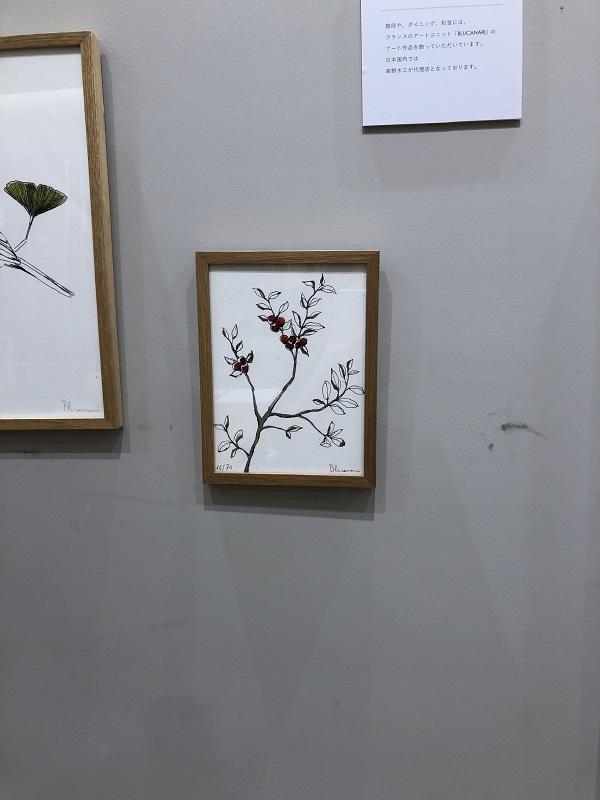 ブルカナリの木の実の絵